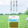 【Ragri(ラグリ)】スマホで野菜の栽培ができる楽天のサービスを検討してみた!